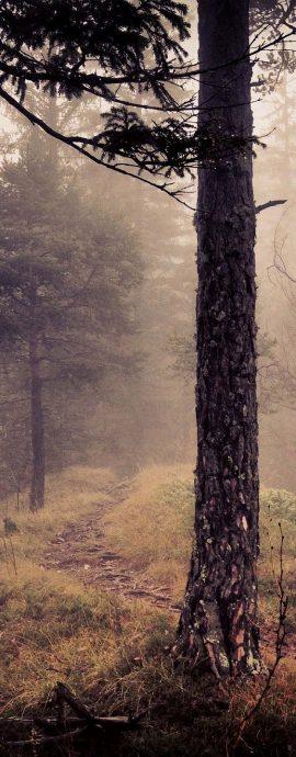 Landscape Photography